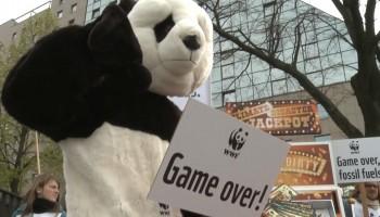 Curso_Videos_CIPO_WWF