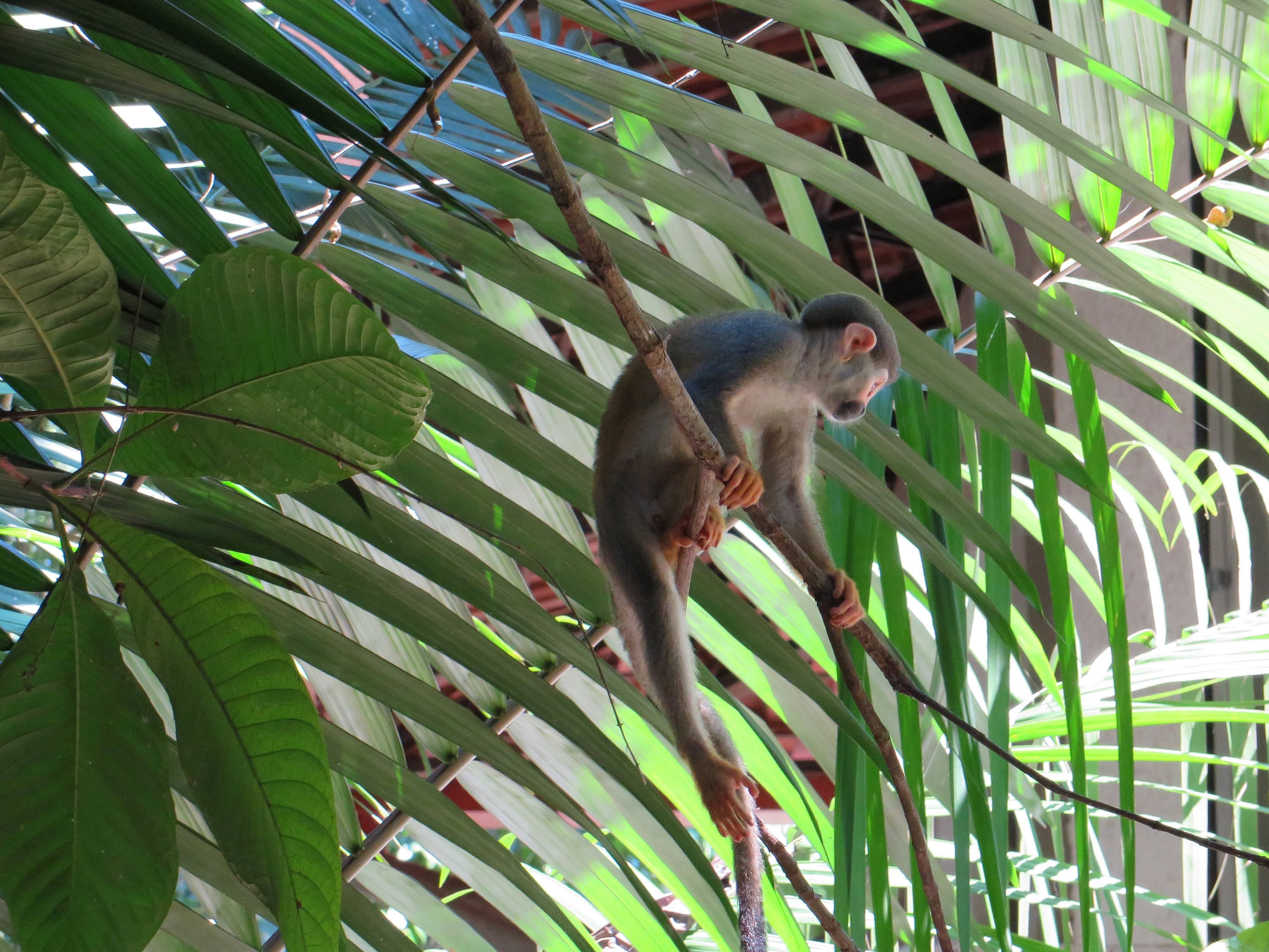 ExpedicionAmazonia8_CIPOCompany