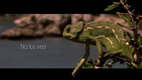 AmigosdelaTierra1_CIPO