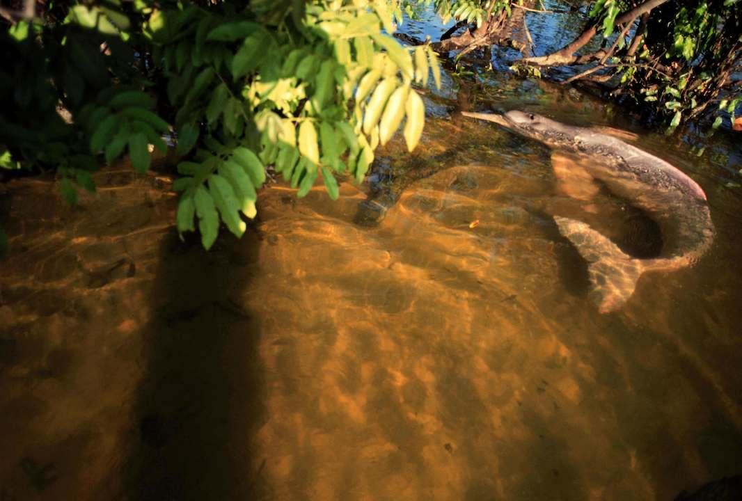 Expediciones Amazonia. CIPO Company