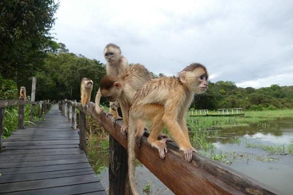 Trabajo en comunicación y soy… el último mono
